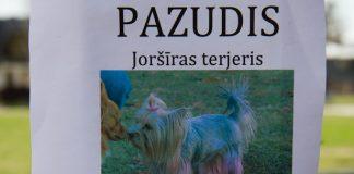 Ikšķilē pazudis Jorkšīras terjers, lūgums pēc palīdzības