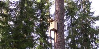 """SIA """"Ozols"""", Lielajā Talkā Ikšķilē izvieto putnu būrīšus pie jaunā skatu torņa."""