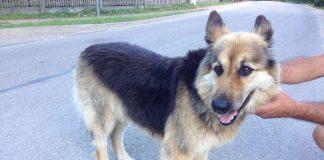 Suņuks kas klīst Lejas un Strēlnieku ielas rajonā.