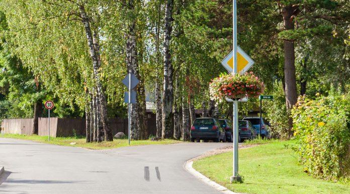 Ziedošā ceļazīme, Ozolu ielas un Dārza ielas krustojums Ikšķilē.
