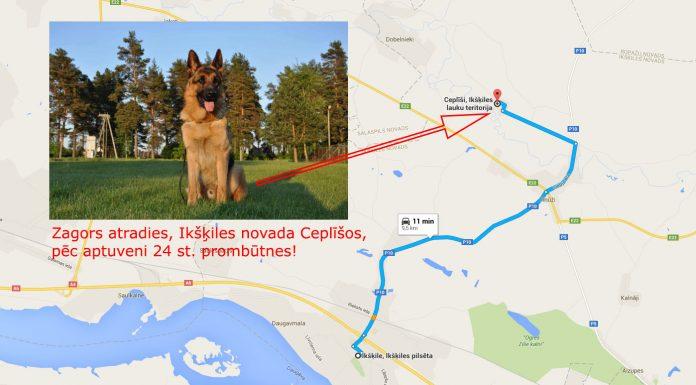 Zagors atradies Ceplisi pēc aptuveni 24 st. prombūtnes. Paldies visiem par palīdzību. #ikšķile #ceplīši #atradies