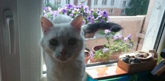 Kaķītis Muris