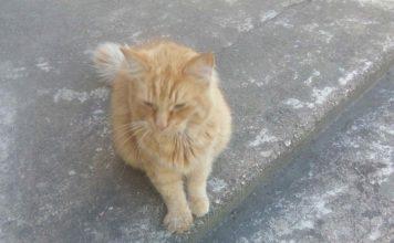 Pieklīdis smuks kaķis